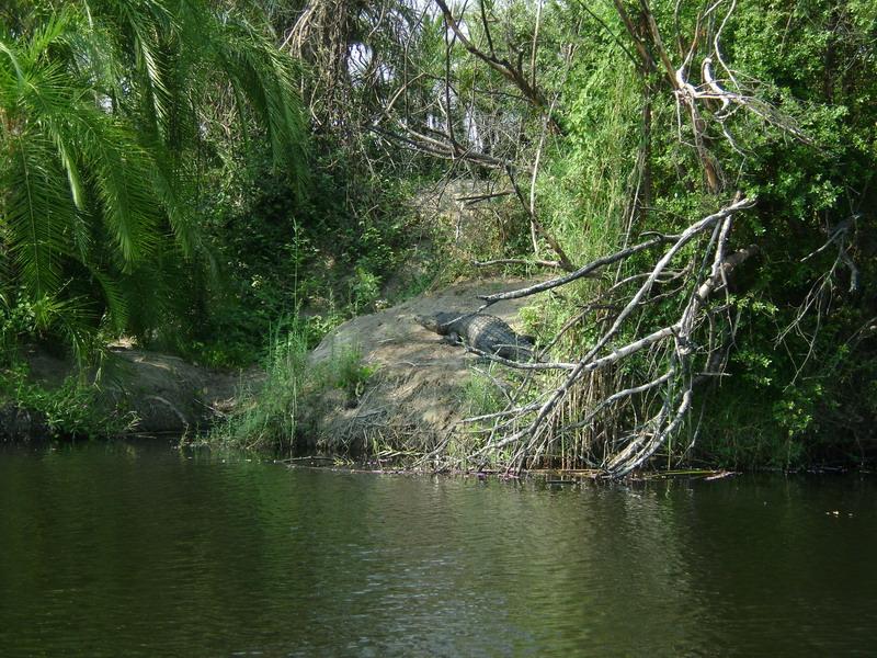 поплыли смотреть на крокодилов реки Okavango