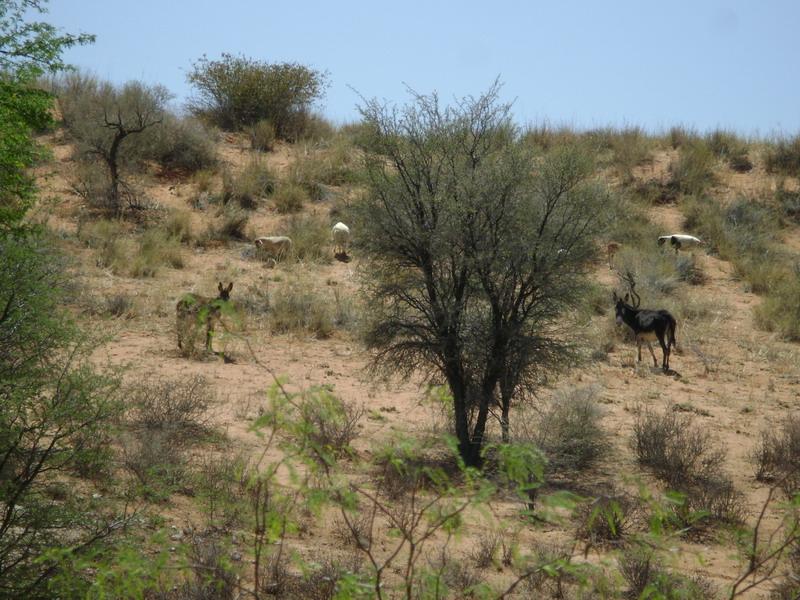 Дикая живность в Африке