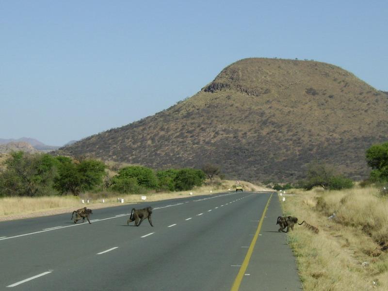 Обезьяны перебегают дорогу в Африке