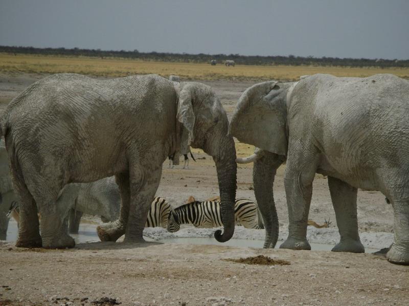 животные в Африке парк